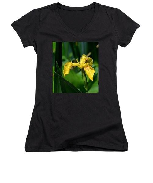 Wild Yellow Iris Women's V-Neck (Athletic Fit)