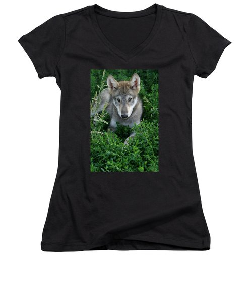 Wolf Pup Portrait Women's V-Neck T-Shirt (Junior Cut) by Shari Jardina