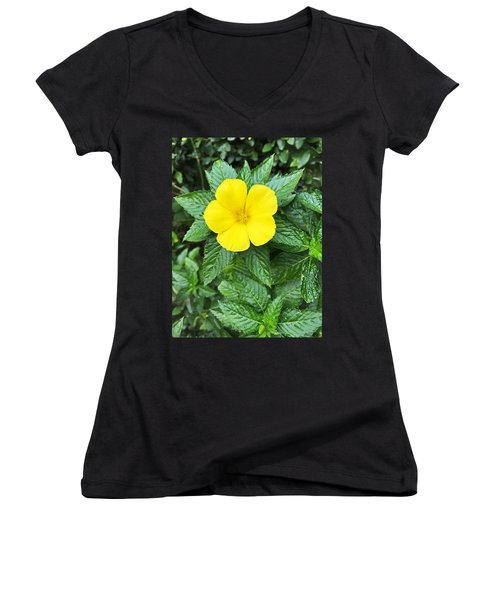 Yellow Alder Blossom Women's V-Neck (Athletic Fit)