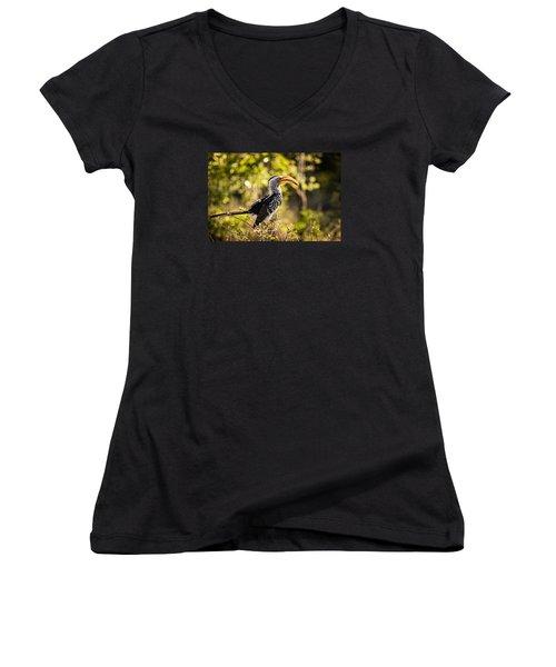 Yellow-billed Hornbill Women's V-Neck T-Shirt (Junior Cut) by Stefan Nielsen