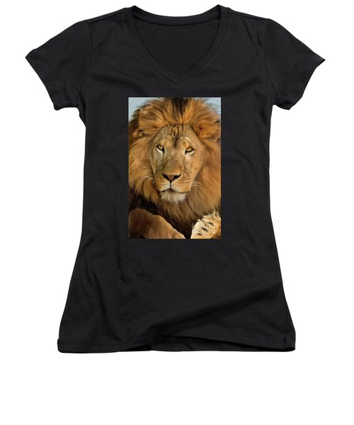 Women's V-Neck featuring the photograph 656250006 African Lion Panthera Leo Wildlife Rescue by Dave Welling