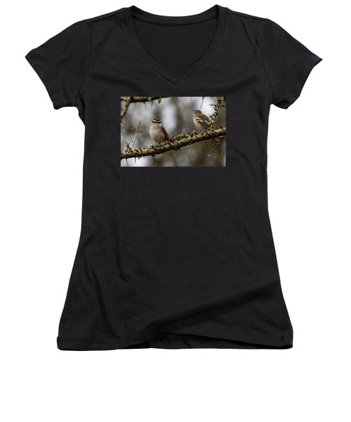 Black-crowned Tchagra And White-browed Scrub-robin Women's V-Neck