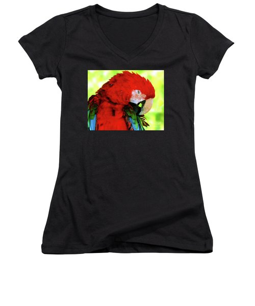 Green-winged Macaw Women's V-Neck