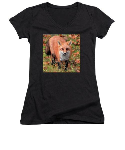 Red Fox Women's V-Neck