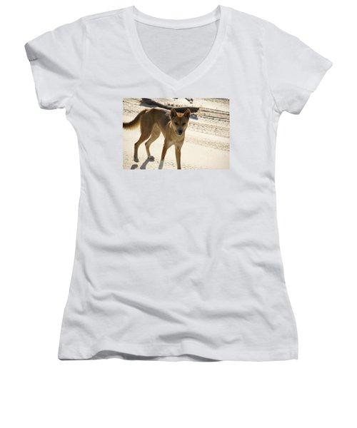 Dingo Women's V-Neck T-Shirt (Junior Cut) by Carol Ailles