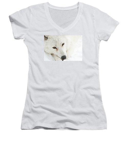 Arctic Wolf  Women's V-Neck