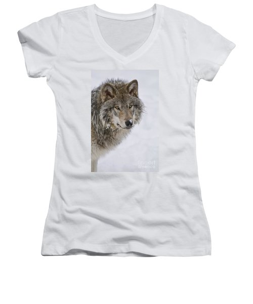 Timber Wolf Pictures Women's V-Neck