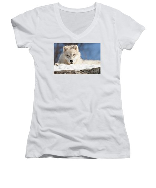Arctic Wolf Pup Women's V-Neck