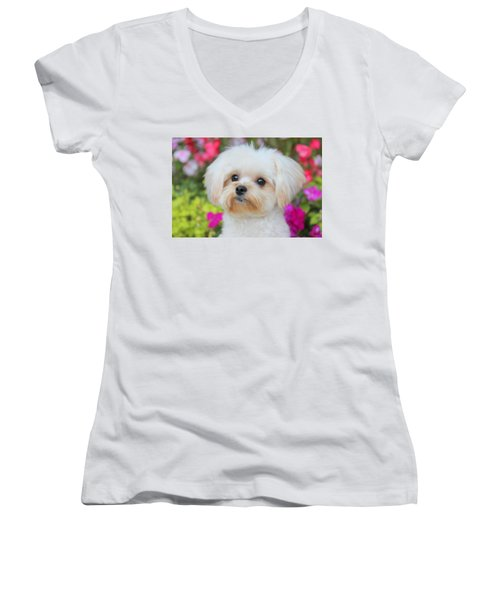 Amidst Women's V-Neck (Athletic Fit)