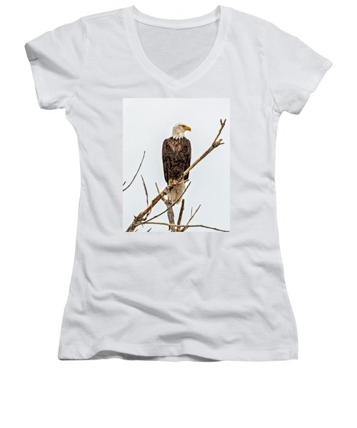 Bald Eagle On A Branch Women's V-Neck (Athletic Fit)