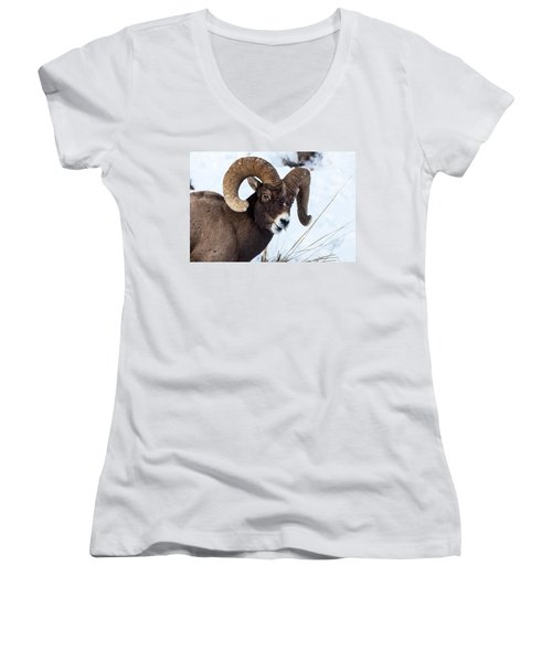 Bighorn Sheep Women's V-Neck