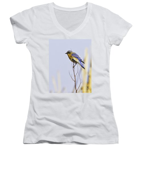 Bluebird Women's V-Neck