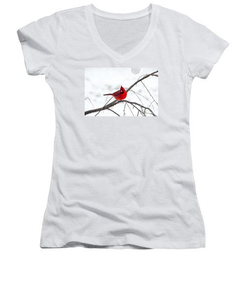 Cardinal On A Branch  Women's V-Neck (Athletic Fit)