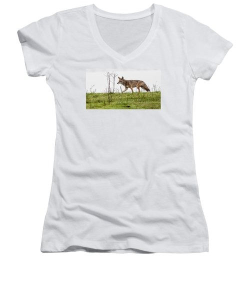 Coyote Women's V-Neck T-Shirt (Junior Cut) by Brian Williamson