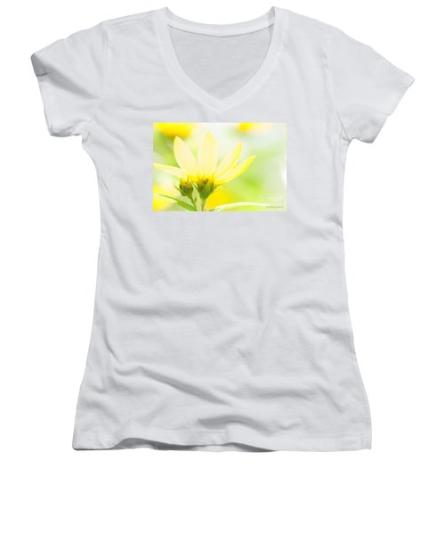 Daisies In The Sun Women's V-Neck T-Shirt (Junior Cut) by David Perry Lawrence