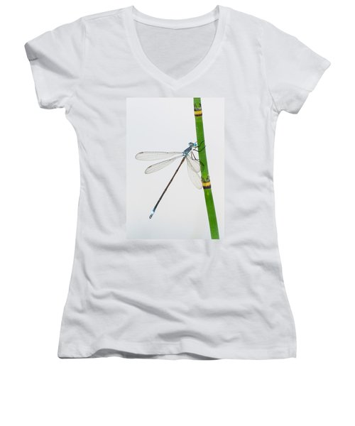 Damselfly On Horsetail Women's V-Neck (Athletic Fit)