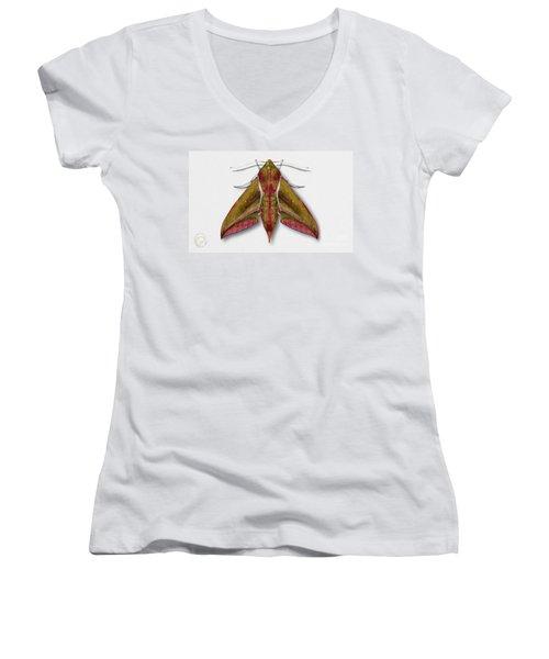 Elephant Hawk Moth Butterfly - Deilephila Elpenor Naturalistic Painting - Nettersheim Eifel Women's V-Neck