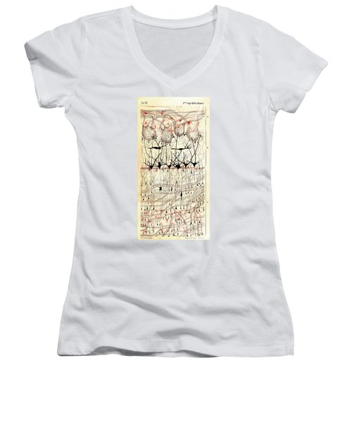 Golgi Olfactory Bulb Of Dog Women's V-Neck T-Shirt (Junior Cut)
