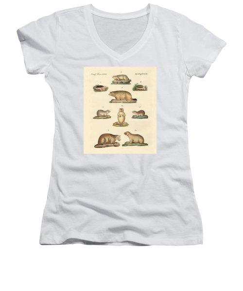 Marmots And Moles Women's V-Neck T-Shirt (Junior Cut) by Splendid Art Prints