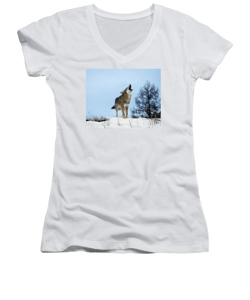 Women's V-Neck T-Shirt (Junior Cut) featuring the photograph Morning Howl by Jack Bell