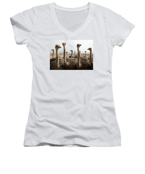 Ostrich Heads Women's V-Neck T-Shirt (Junior Cut) by Johan Swanepoel