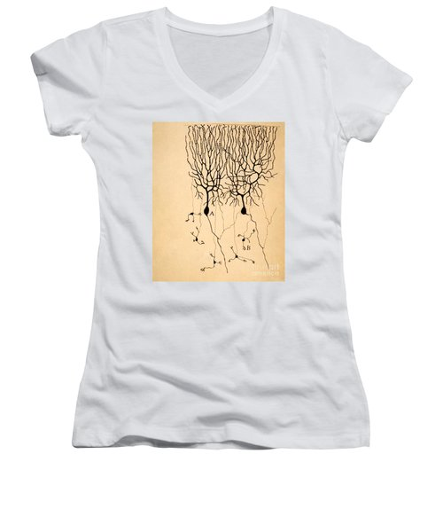 Purkinje Cells By Cajal 1899 Women's V-Neck T-Shirt (Junior Cut)