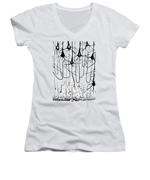 Pyramidal Cells Illustrated By Cajal Women's V-Neck T-Shirt (Junior Cut)