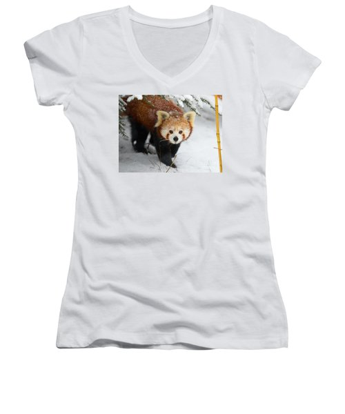 Red Panda In The Snow Women's V-Neck