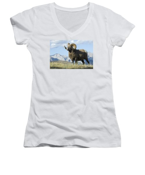 Rocky Mountain Big Horn Sheep Women's V-Neck T-Shirt (Junior Cut) by Bob Christopher