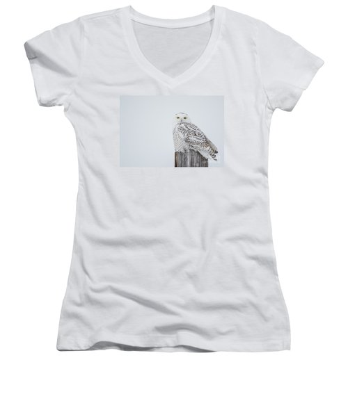 Snowy Owl Perfection Women's V-Neck T-Shirt (Junior Cut) by Cheryl Baxter