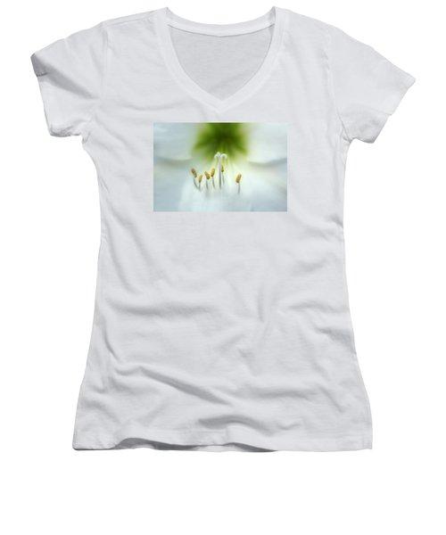 Soft Beauty Women's V-Neck T-Shirt (Junior Cut)