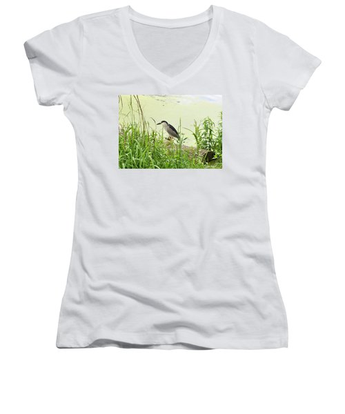 The Black-crowned Night Heron Women's V-Neck T-Shirt (Junior Cut) by Verana Stark