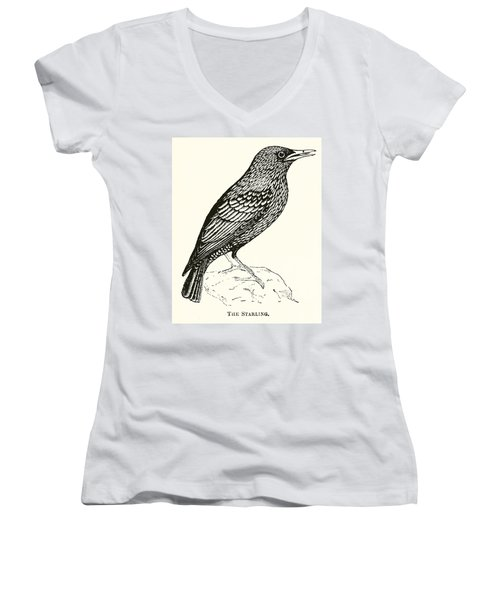 The Starling Women's V-Neck T-Shirt (Junior Cut) by English School