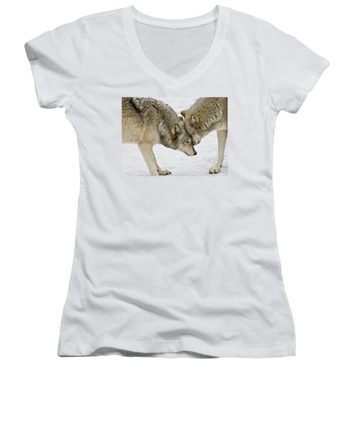 Two Wolves In  A Staredown Women's V-Neck T-Shirt (Junior Cut) by Gary Slawsky