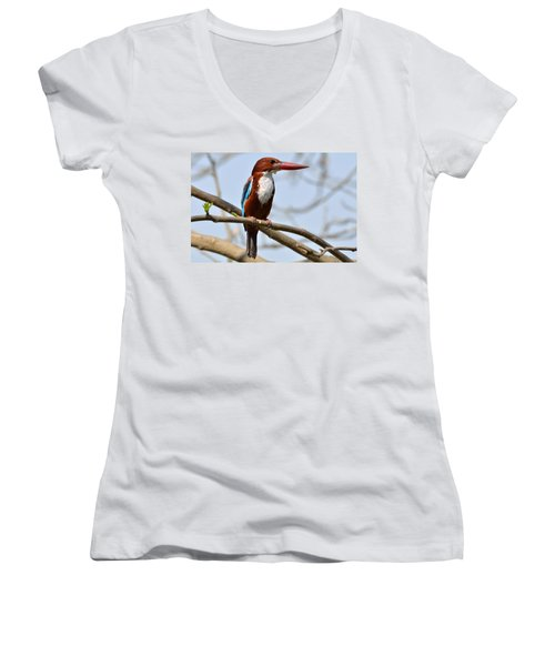 White Breasted Kingfisher Women's V-Neck T-Shirt (Junior Cut) by Fotosas Photography