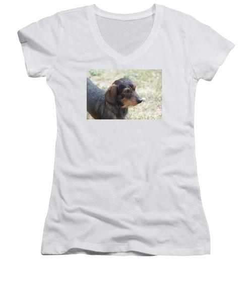 Wire Haired Daschund Women's V-Neck T-Shirt