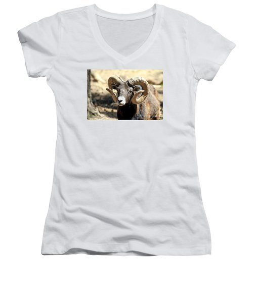 European Big Horn - Mouflon Ram Women's V-Neck T-Shirt (Junior Cut)