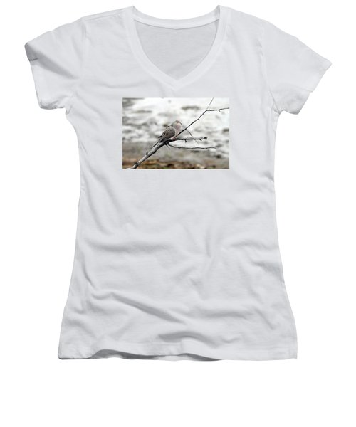 Women's V-Neck T-Shirt (Junior Cut) featuring the photograph Good Morning Dove by Elizabeth Winter