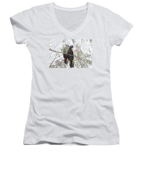 Red Tailed Black Cockatoos Women's V-Neck T-Shirt (Junior Cut) by Douglas Barnard