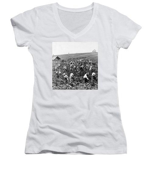 Tobacco Field In Montpelier - Jamaica - C 1900 Women's V-Neck T-Shirt