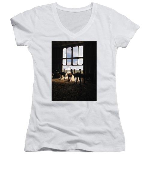Alpaca  Women's V-Neck T-Shirt