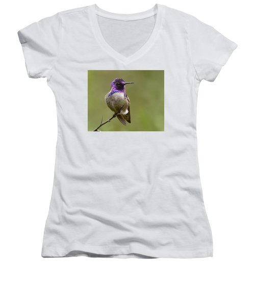 Costa's Hummingbird, Solano County California Women's V-Neck T-Shirt (Junior Cut) by Doug Herr