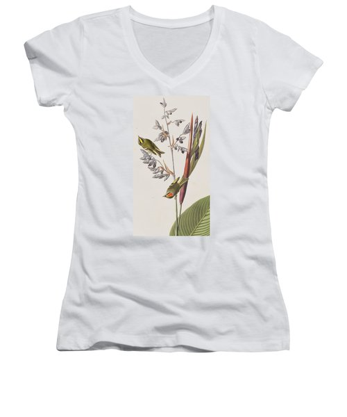 Golden-crested Wren Women's V-Neck T-Shirt (Junior Cut) by John James Audubon