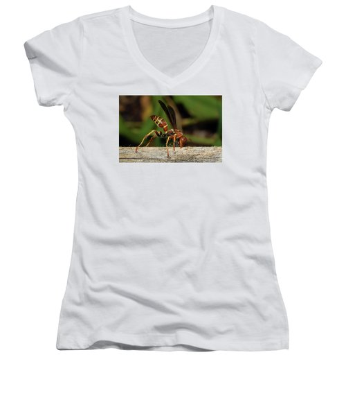 Paper Wasp Women's V-Neck (Athletic Fit)