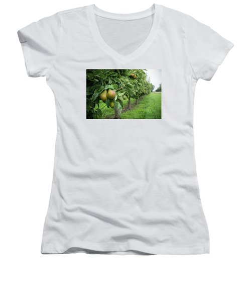 Pear Orchard Women's V-Neck T-Shirt (Junior Cut) by Hans Engbers