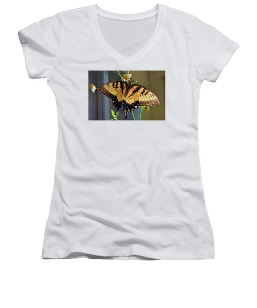 Tiger Swallowtail Women's V-Neck