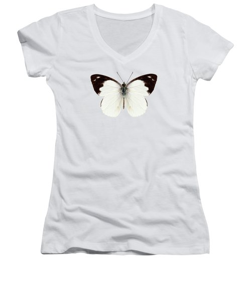 White Butterfly Species Apias Indra Indra Women's V-Neck (Athletic Fit)