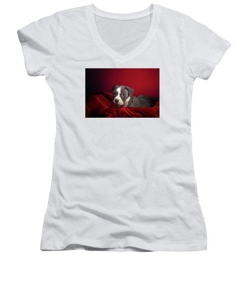 American Pitbull Puppy Women's V-Neck T-Shirt (Junior Cut) by Peter Lakomy