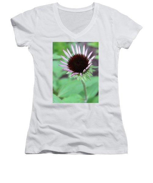 Emerging Coneflower Women's V-Neck T-Shirt (Junior Cut) by Rebecca Overton
