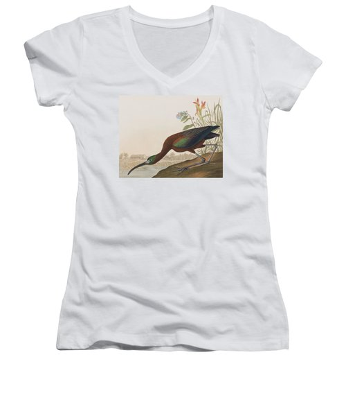 Glossy Ibis Women's V-Neck T-Shirt (Junior Cut) by John James Audubon